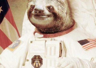 sloth-552x675